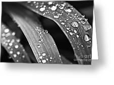 Raindrops On Grass Blades Greeting Card