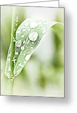Raindrops On Grass Greeting Card