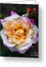 Raindrops On Rose Flower Greeting Card