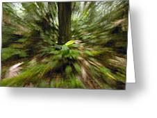 Rainforest Andes Mountains Ecuador Greeting Card