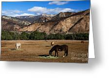 Rancho Oso - California Greeting Card