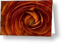 Ranunculus Greeting Card by Cindy Rubin