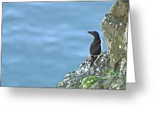 Razorbill Iceland Greeting Card
