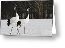 Red-crowned Cranes Courting Greeting Card