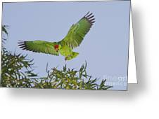 Red-crowned Parrot Greeting Card