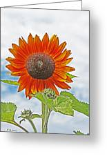Red Face Sunflower At Olympia Greeting Card