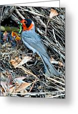 Red-faced Warbler At Nest With Young Greeting Card
