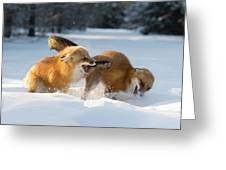 Red Foxes Interacting In Snow Greeting Card