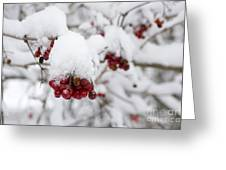 Red Fruit With Snow Greeting Card