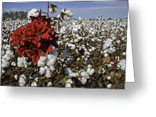 Red In The Cotton  Greeting Card