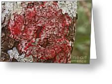 Red Lichen  Greeting Card