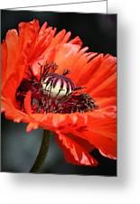 Red Orange Poppy Greeting Card