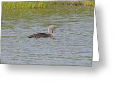 Red-throated Loon Greeting Card