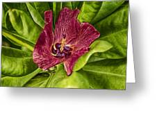 Red Tropical Tree Flower Greeting Card