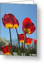 Red Tulips With Blue Sky Background Greeting Card