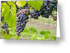 Red Wine Vineyard 2 Greeting Card