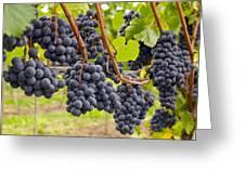 Red Wine Vineyard 4 Greeting Card
