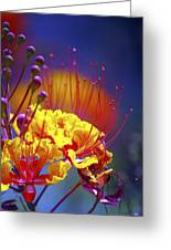 Red Yellow Blossoms 10197 Greeting Card