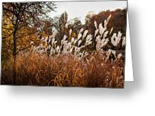 Reeds Highlighted By The Sun Greeting Card