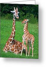 Reticulated Giraffe Calf With Mother Greeting Card