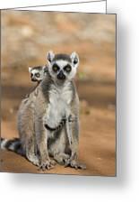 Ring-tailed Lemur And Baby Madagascar Greeting Card