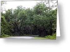 Road In The Woods Greeting Card