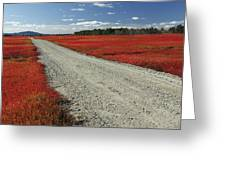 Road Through Autumn Blueberry Maine Greeting Card