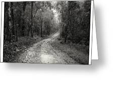 Road Way In Deep Forest Greeting Card