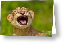 Roaring Practice Greeting Card by Ashley Vincent