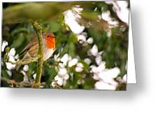 Robin Greeting Card by Dave Woodbridge