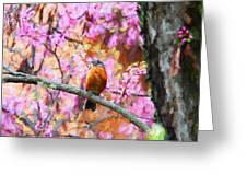 Robin In A Red Bud Tree Greeting Card