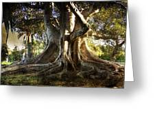 Roots Greeting Card by George Lenz
