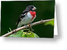 Rose-breasted Grosbeak Greeting Card
