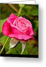 Rose Flower Greeting Card