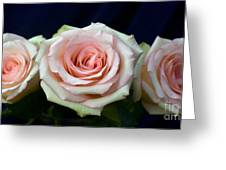 Roses 8405 Greeting Card