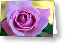 Roses Greeting Card