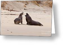 Rough Courtship Of Male And Female Hookers Sealions Greeting Card