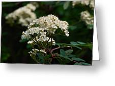 Rowan Flowers Greeting Card