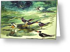 Royal Terns And Black Skimmers Greeting Card
