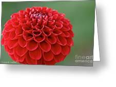 Ruby Dew Greeting Card