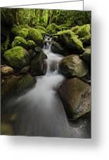 Ruckel Creek  Oregon, United States Greeting Card