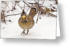 Ruffed Grouse Walking On Snow - Horizontal Greeting Card