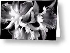 Ruffled Daffodils  Greeting Card