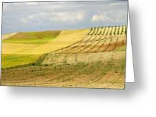 Rural Fields Greeting Card
