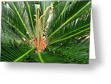 Sago Palm Greeting Card