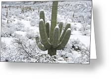 Saguaro Cactus After Rare Desert Greeting Card
