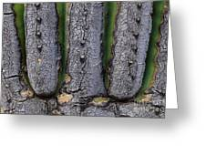 Saguaro Cactus Close-up Greeting Card