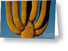 Saguaro Cactus Greeting Card