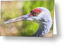 Sandhill Crane Grus Canadensis Greeting Card
