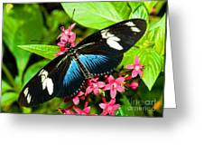 Sara Longwing Butterfly Greeting Card